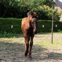 paardje1
